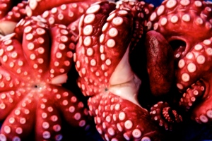 Octopus (Taco) Tsukiji Fish Market, Tokyo Japan