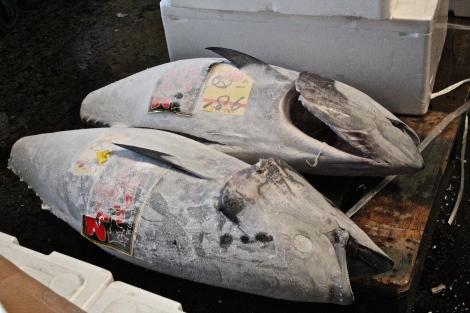 Giant Tuna Tsukiji Fish Market, Tokyo Japan