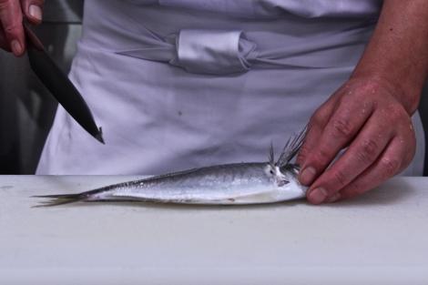 How To Make Sushi: Filleting Mackerel