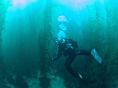 Diving Anacapa Island, California